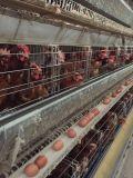 Добавка животного питания Unigrow на Breeding цыпленка