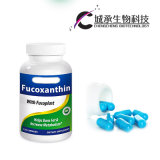 Certificação de GMP Fucoxanthin Plus cápsulas de perda de peso, Fino Vie Herbal pílulas de Emagrecimento