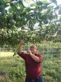Unigrow organischer Schmutz-Biodüngemittel auf dem Passionsfrucht-Pflanzen