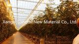 cordicella del pomodoro di 7500d pp con sottoposto agli UV