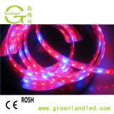 Das volle Spektrum 5050 LED flexibel wachsen Streifen mit rotes Blau-Farbe