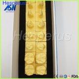 1: 1 постоянных зубов с базовой модели стоматологических зуб зубов стоматолог стоматология анатомические модели анатомических областей Asin