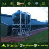Estructura de acero prefabricada granja de pollos y aves de corral de la casa