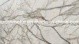Печать/Разработано Prepainted оцинкованной стали (катушки PPGI/Мраморной PPGI PPGL) // оцинкованной с полимерным покрытием