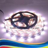 300 LEDs SMD LED RGBW Non-Waterproof5050 tira