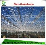 현대 농업을%s Venlo 유형 유리제 온실