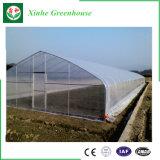 Invernadero comercial superventas de la película plástica del Multi-Palmo para Growing vegetal