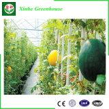Meilleure vente commerciale agricole Multi-Span Le film en plastique pour de plus en plus de légumes de serre