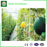 A melhor estufa comercial de venda da película plástica da Multi-Extensão para Growing vegetal