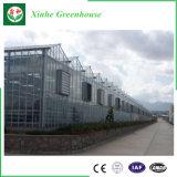 Estufa de policarbonato comerciais de grande escala