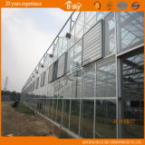 Venlo Structure를 가진 다중목적 Beautiful Glass Greenhouse