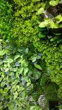 Высокое качество искусственных вертикальный сад Pflanzentyp 3