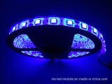 5050 flexibele Waterproof 60PCS/M RGB LED Strip
