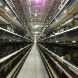 Система оборудования клетки реактор-размножитела птицефермы (тип рамка)