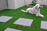 Трава сада, трава украшения, лужайка сада (L40-T)