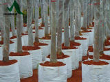 De Zak van de Planter van de Controle van de wortel