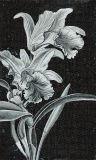 현대 Design White 및 Black Classical Hand Cur Art Mosaic Design Picture (CFD114)