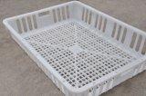 Cage en plastique de transport de poulet pour le poulet