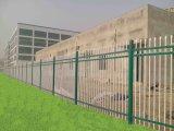 Cerca revestida galvanizada do engranzamento de fio do jardim da segurança do pó