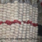 De verse Witte Leverancier van het Knoflook van de Exporteur van China