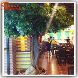 De altijdgroene Kunstmatige Boom van Ficussen die van Fiberglas wordt gemaakt