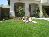 Artificial Grass Waterless Lawnの景色