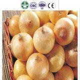 Лук китайского свежего желтого урожая Onion/нового свежий желтый