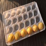 Umweltfreundliches pp. Plastikwegwerftellersegment der null Verunreinigungs-unterschiedlichen Größen-für Frucht