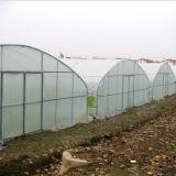 Casa verde de película plástica do túnel do preço de fábrica de China no melhor