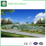 Casa verde de aluminio de cristal/de la depresión del vidrio Tempered para la agricultura/el anuncio publicitario