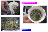 Выжмите сок из сахарного тростника (машины ZJ170-A) легко вывести из строя роликов для очистки салона красоты