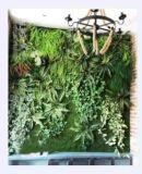 Piante di alta qualità e fiori artificiali della parete verde Gu-Mx-Green-Wall0015