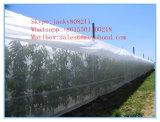Против Aphid Net/ Белый Fly Net/ против насекомых взаимозачет