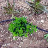 Mangueira porosa de borracha do Soaker para a irrigação
