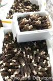 유기 음식 그물버섯 고품질 신선한 버섯
