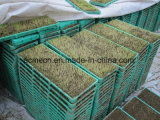 安い価格の新しい設計されていた高品質の米プランター