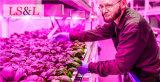 Завод света прокладки веревочки растет светлым с приводом UL, Ce&RoHS для прокладок