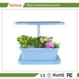 Keisue表の花および野菜マイクロ農場