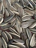Профессиональные экспорт семян подсолнечника высокого качества