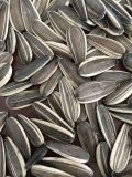 Professional exportar sementes de girassol de alta qualidade