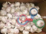 Estándar de exportación de embalaje de cartón Normal fresco ajo blanco