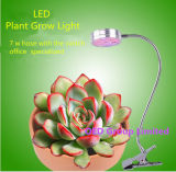a planta do diodo emissor de luz da lâmpada do crescimento da mesa 5W cresce luzes com braçadeira da mola e braço do Gooseneck