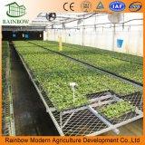 Низкое Себестоимость Сельское Хозяйство 200 Micron УФ-устойчивый Пластиковый Пленочный Туннель