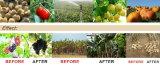 100% 수용성 식물성 근원 아미노산 비료