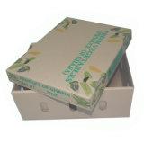 Rectángulo de papel acanalado de la legumbre de fruta
