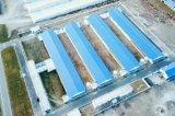 Délestage de la volaille dans le poulet de ferme avec l'équipement pour la vente de poulets de chair