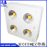 Il migliore prezzo Glebe che illumina la PANNOCCHIA piena LED di spettro 600W coltiva l'indicatore luminoso