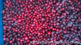 Lingonberries Lingonberries IQF, заморожены, дикой Lingonberries IQF, замороженных дикой Lingonberries