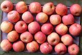 Dulce crujiente deliciosa manzana estrella roja