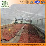 야채를 위한 격리된 강화 유리 온실
